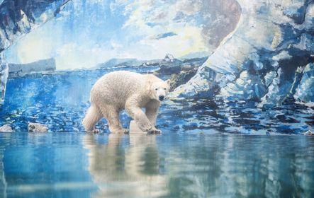 A nyíregyházi állatkert új lakója: Fiete