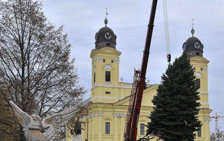 Mindenki karácsonyfája Debrecenben