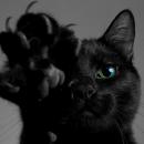 Fekete macska, mint szerencsétlenség. És a fehér?