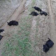 Kidobott kutyák
