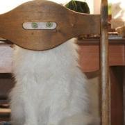 A megfigyelő macska