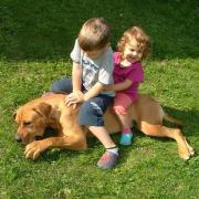 Béketűrő kutya