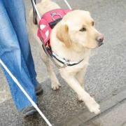 Nagy segítség a vakvezető kutya