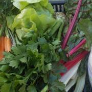 Friss zöldségek   Fotó: Pásztortáska Baráti Kör