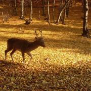 Az erdő szépsége