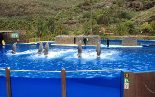 Barátságos delfinek bemutatója a Palmitos Parkban