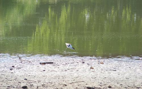 Keresgélő madár, meddig talál élelmet?