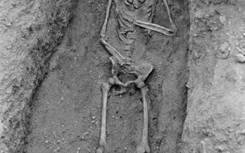 A teljes csontváz