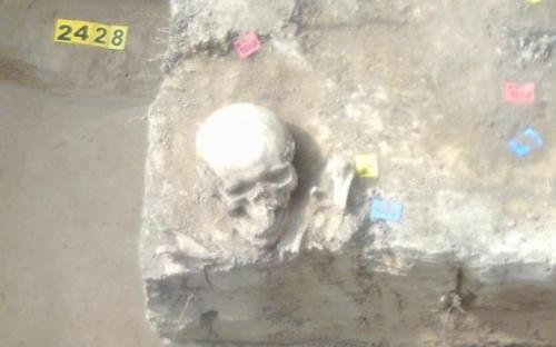 Újabb koponyák
