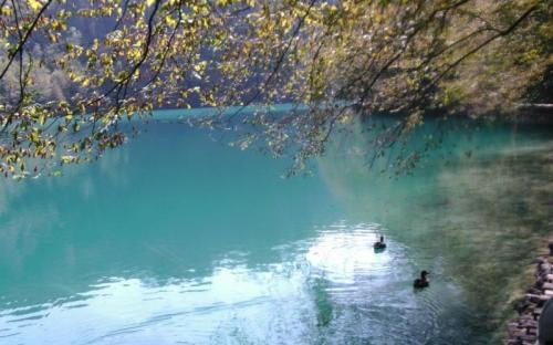 Szépséges víztükrön úszó vadkacsák